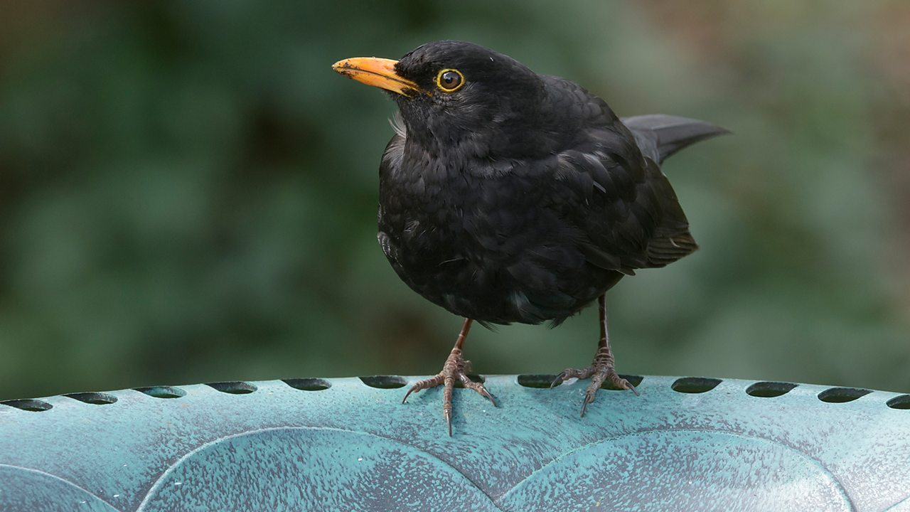 Can you spot these birds in your garden, park or playground?