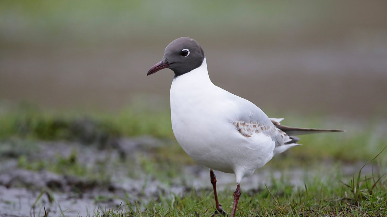 Quiz: Can you name these common garden birds?