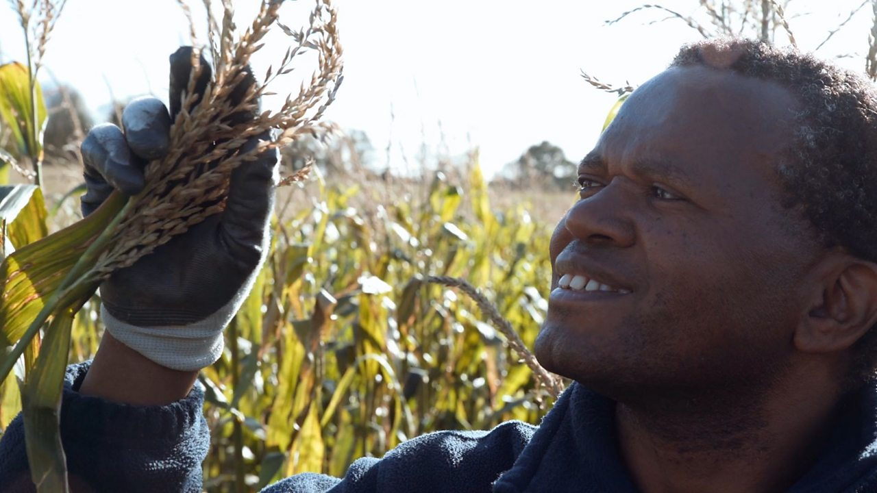 David Mwanaka - Becoming a farmer in Britain
