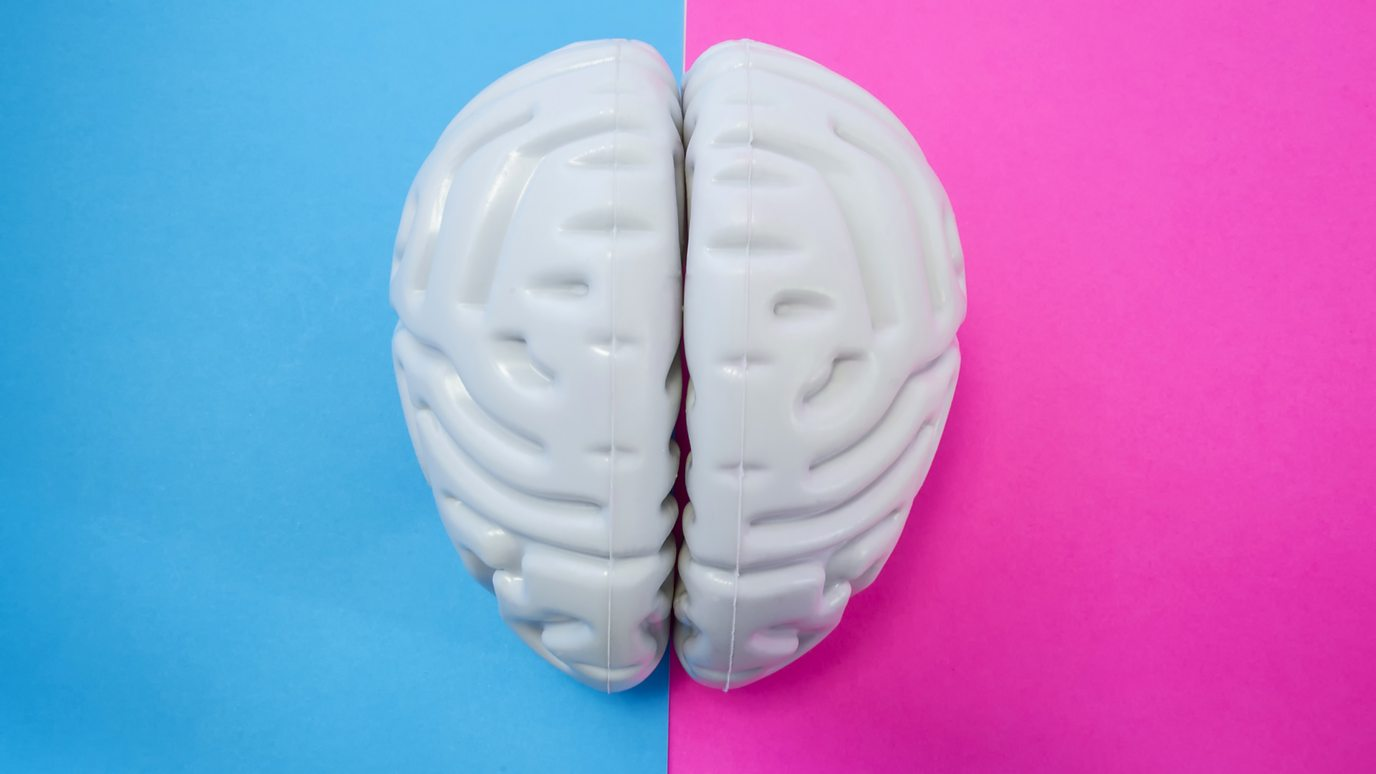 Are male and female brains different? - BBC Reel