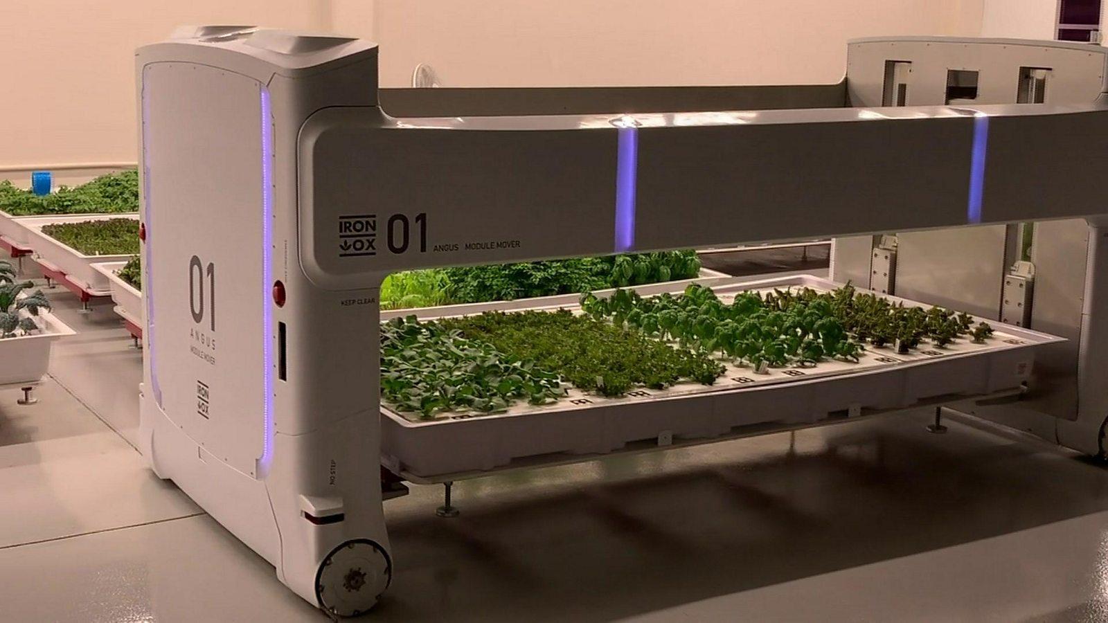 The indoor leafy veg farm that runs itself