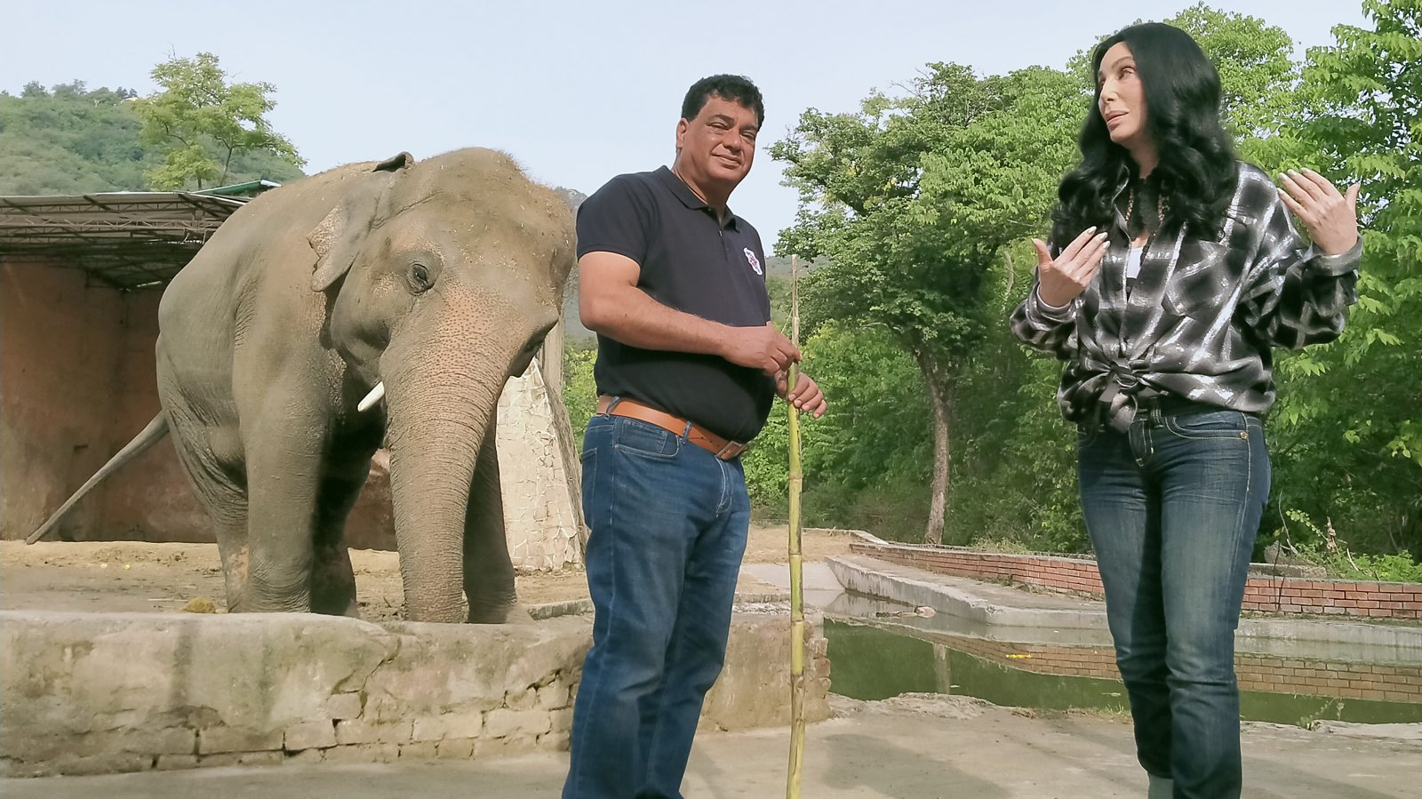 The popstar and the rescue of a lonely elephant