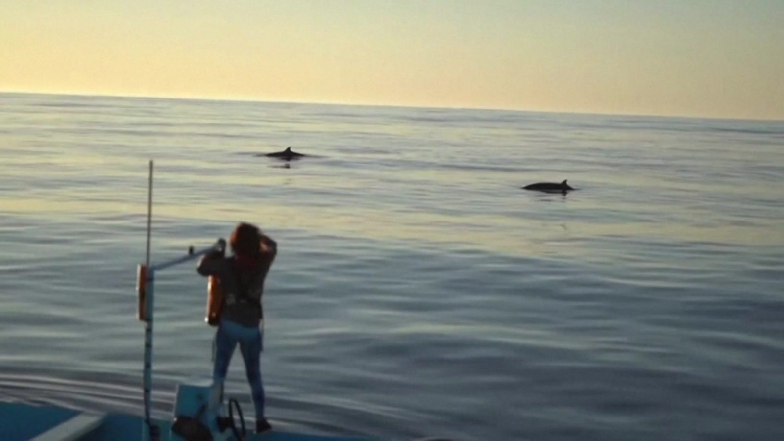 'New' whale species seen off Mexican coast