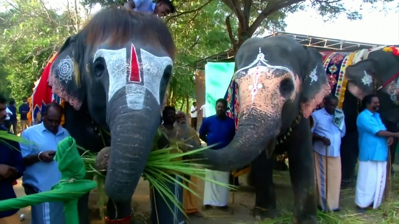 The clinic where elephants come to recuperate