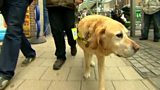 Guide dogs charity: 'Get tough on irresponsible owners'