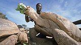 Senegalese tortoise expert Tomas Diagne