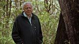 Ask Attenborough