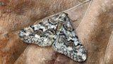 Moths in the UK
