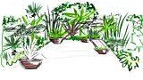 Joe's tropical plants