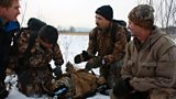 Tracking tigers in the frozen forests of Siberia