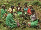 Virunga Women