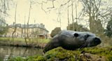 Otters return to waterways