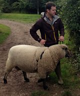 Matt and the Shropshire sheep