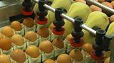Egg Fraud