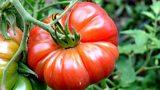 Radio 4: Food and Farming Awards