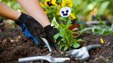 BBC Gardening