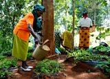 Women at the Tree Nursery