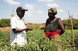 Village-based entrepreneurs