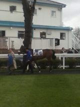 Alan Pickering's horse, Whitby Jet.