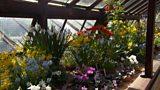Alpine garden featured