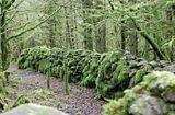 Cavan Burren Forest