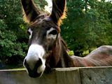 The Donkey Whisperer