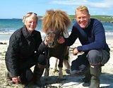 Talented Shetland ponies