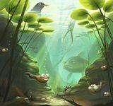 Pond life inspiration