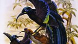 BBC Arts: Painting Paradise