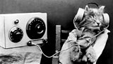 Radio Cat wearing Headphones