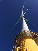 Birds and turbines