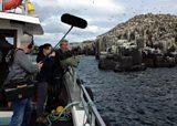 Diving Auks