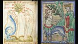 Five fantastic medieval beasts and where to find them