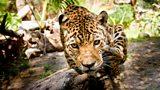 Wonder facts: The animals