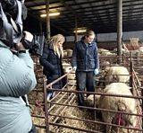 From farm to yarn