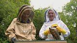 Rare breed bees