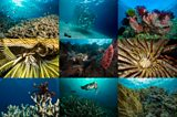 What has happened to the world's coral?