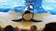Storyville - 2013-2014 - Blackfish - The Whale That Killed