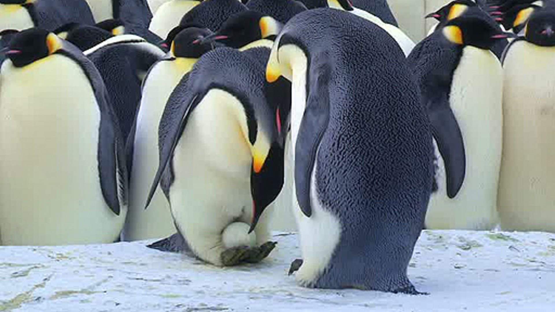 penguin dating site Plenty of fish in the sea: lonely penguin joins dating site to search for his one true love.