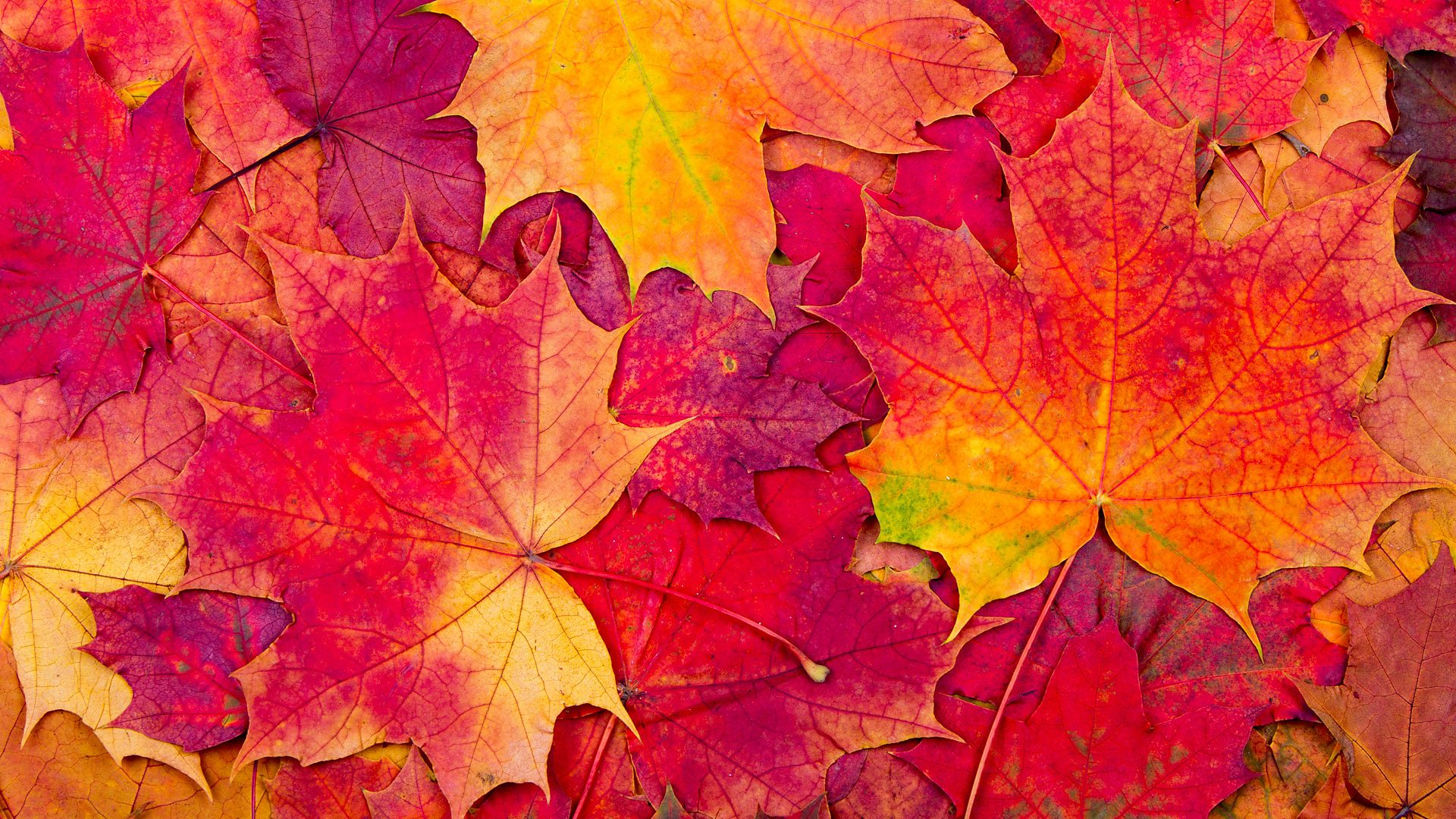 BBC Radio 4 - Four Seasons - Autumn oddities: 22 facts about the 'fall'