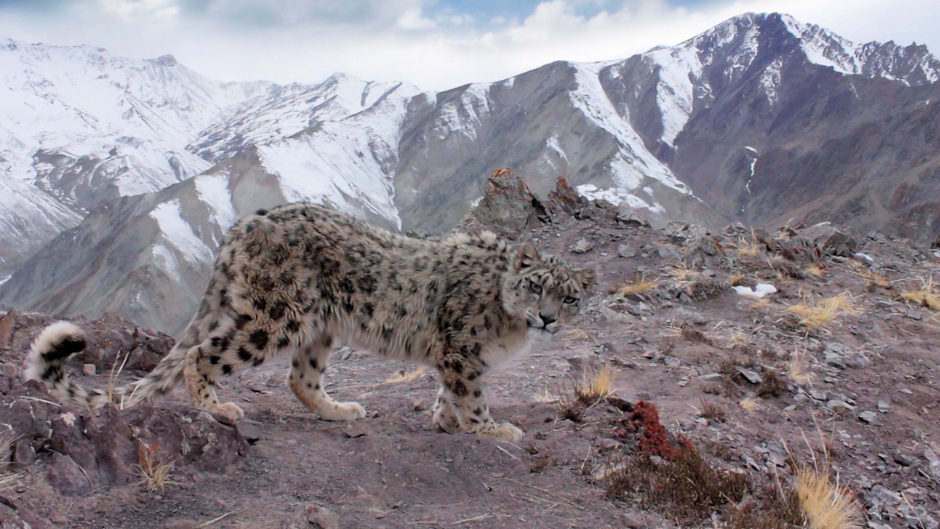 Snow Leopard HD Desktop Wallpapers