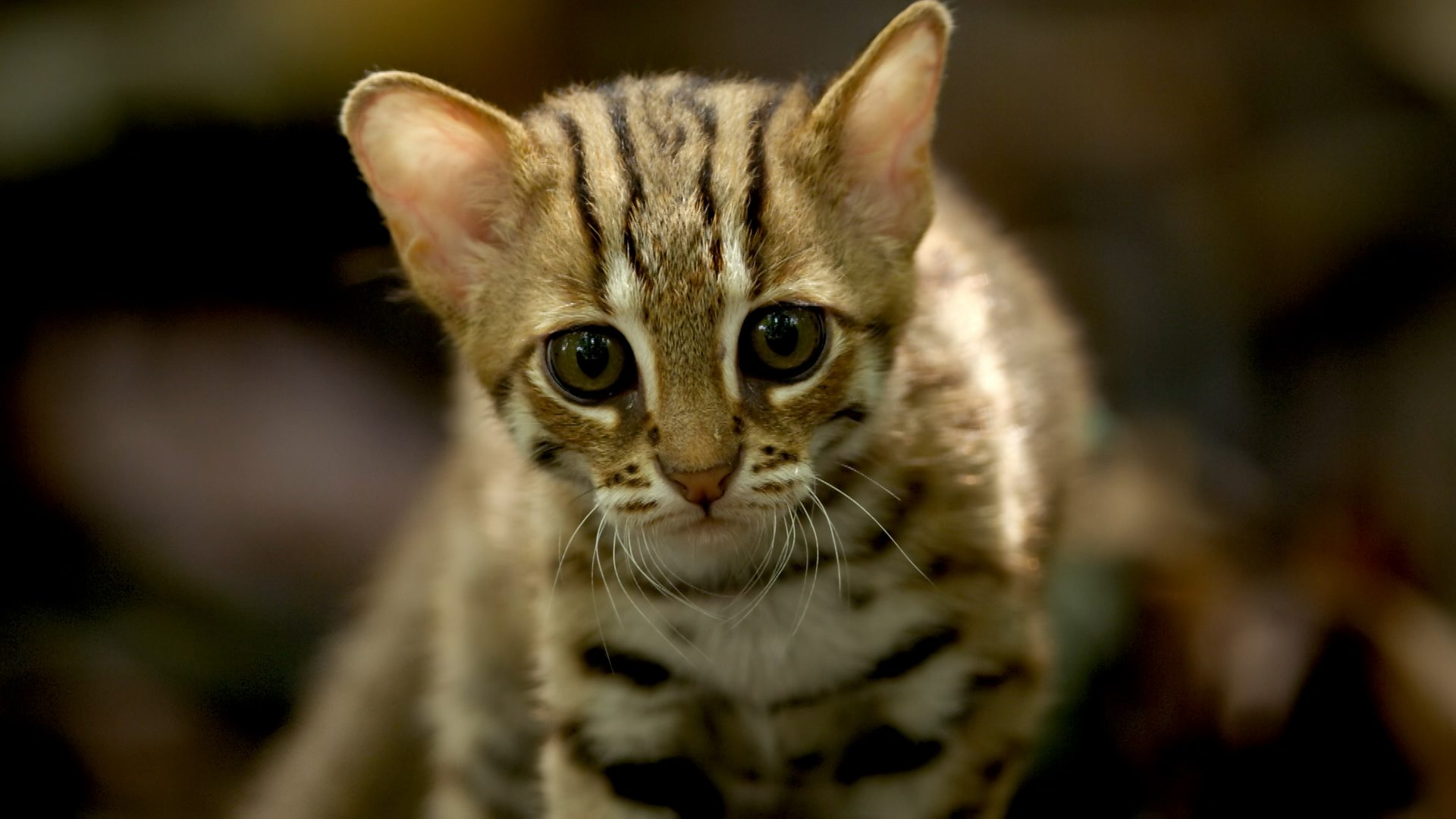 The smallest cat in the world - who is she 28
