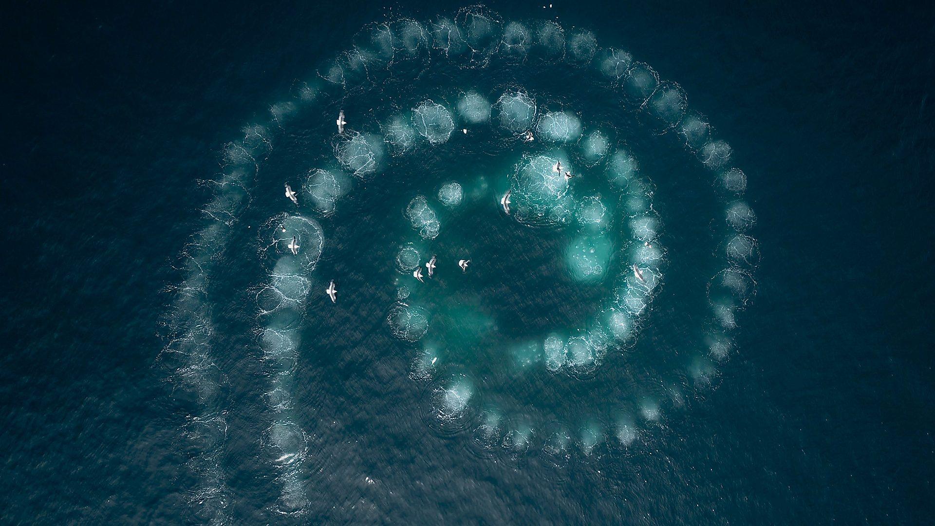 הפוטג' העילי הבא של גדול סנפיר צד דגים באלסקה מהפנט ביופיו