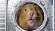 That 'Pets: Wild At Heart' hamster who filled his cheeks? I fell in love and kept him as my own