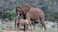 Growing up around elephants opened my eyes to the magic of nature