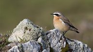 BTO Migration Diary - Part 3: Migration from Fair Isle