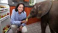 Nature's Miracle Orphans: I can't explain my bond with Moyo, the baby elephant