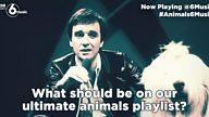 #Animals6Music