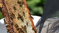 A beekeeper's guide to extracting honey
