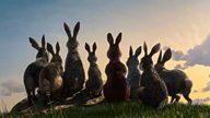 Adapting Watership Down for BBC One